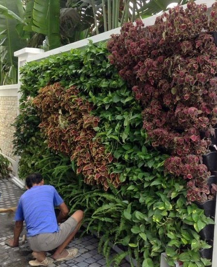 Installing the Off the Wall Garden System